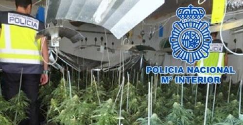 La Policía Nacional desmantela dos centros de producción de marihuana y derivados con cinco detenciones.jpg