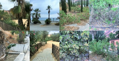El PSOE denuncia el lamentable estado de abandono de zonas ajardinadas y mobiliario urbano de Almuñécar.jpg