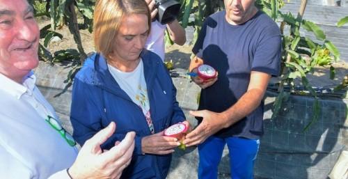 La alcaldesa reafirma el compromiso del Ayto. de Motril de apoyar a los pequeños productores hortofrutícolas.jpg