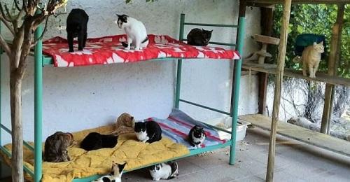El Ayto. de Salobreña pone en marcha una campaña para controlar las colonias de gatos callejeros.jpg