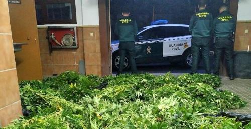La Guardia Civil realiza dos intervenciones contra el cultivo ilegal de marihuana en Ugíjar y Atarfe.jpg
