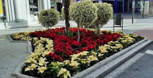 El Ayuntamiento culmina la plantación de los 4.500 pascueros que adornan los parques y jardines del término municipal.jpg