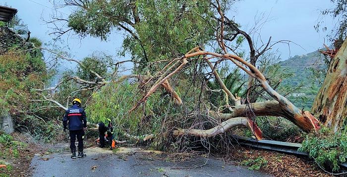 La carretera de la Cabra cortada más de una hora por la caída de un árbol.png