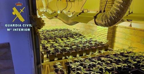 La Guardia Civil interviene más de 650 plantas de cannabis sativa en Huétor Vega y Fuente Vaqueros.jpg
