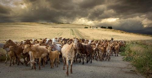 Fallado el concurso de fotografía 'Medio Rural en Andalucía 2019'