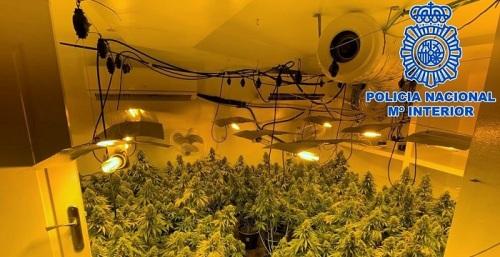 La Policía Nacional desmantela tres plantaciones de marihuana a gran escala ubicadas en la costa
