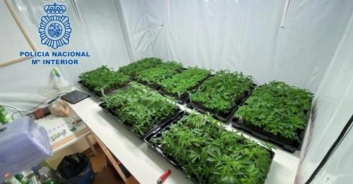 La Policía Nacional desmantela en Motril un punto de producción a gran escala de cannabis sativa
