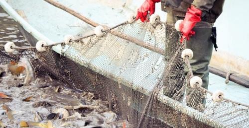 Casi 400.000 euros para potenciar la venta y promoción de productos pesqueros y acuícolas