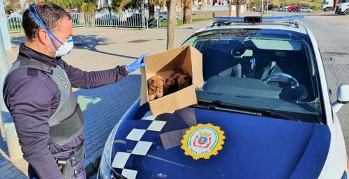 La Policía Local de Motril 'rescata' a unos cachorros abandonados