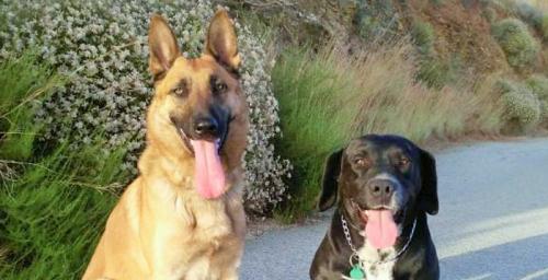 Perros patrulla canina Almuñécar